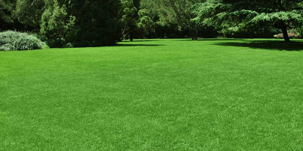 lawn maintenance services in new braunfels, tx
